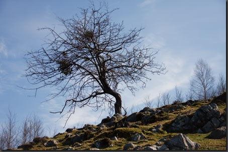 Baum-Originalfoto