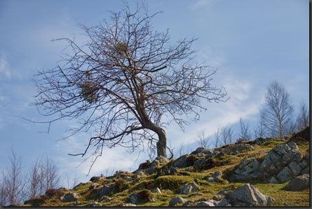 Baum-Viveza